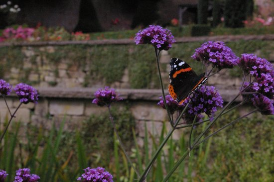 Hopton Hall Gardens: Beautiful butterflies