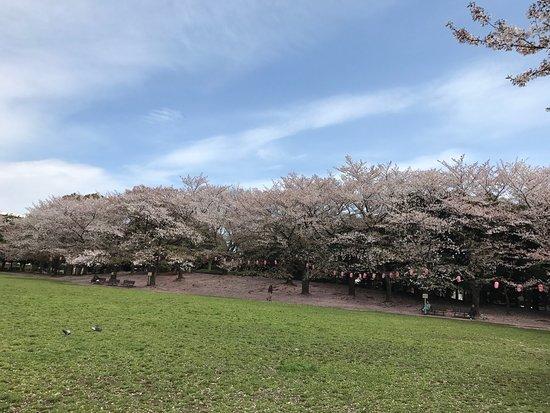 Warabi, Japón: photo9.jpg