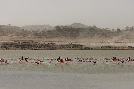 Abidjatta-Shalla National Park Photo