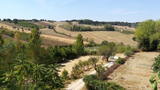 Monte San Vito, Италия: IMG_20170826_115624_large.jpg