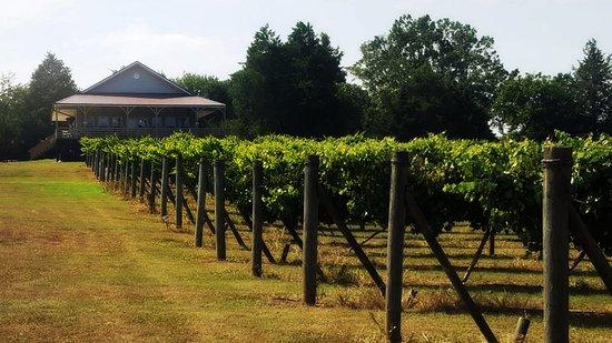 Newberry, SC: Vineyard