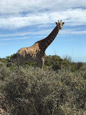 Buffelsfontein Game & Nature Reserve - Day Tours