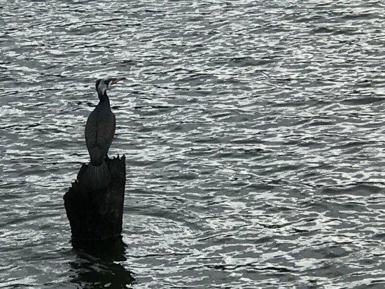 Periyar Lake: photo1.jpg