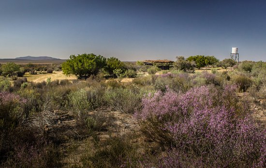 Papkuilsfontein Guest Farm: This is a panorama of the campsite.