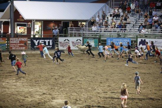 Jackson Hole Rodeo: Mutton Bustin'