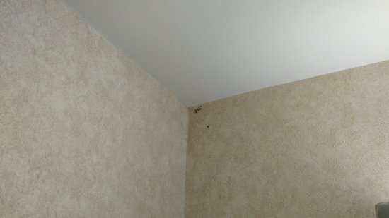 Austell, جورجيا: even more mold