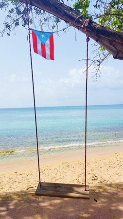 Seven Seas Beach: 2017-08-31 08_large.jpg