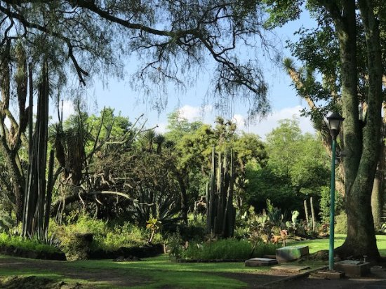 Travelian Tours Botanical Garden Mexico City