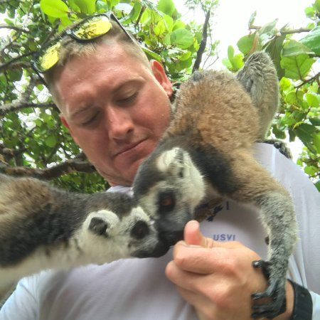 North Sound, Virgin Gorda: lemur's just hanging out!