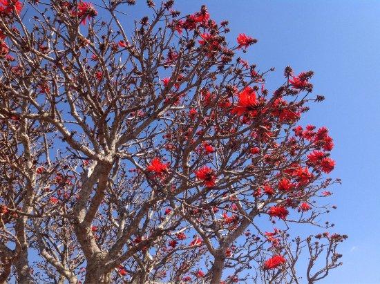 Graskop, Afrika Selatan: photo4.jpg