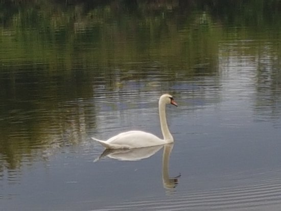 Holywell, UK: 20170831_163721_large.jpg