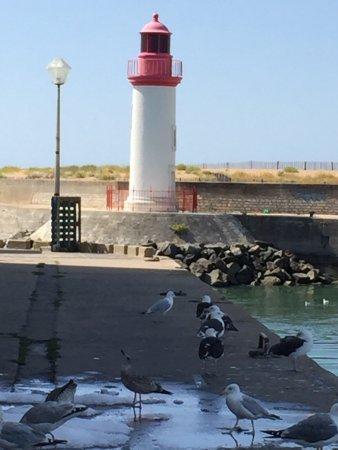 Le Port de la Cotinière : photo4.jpg