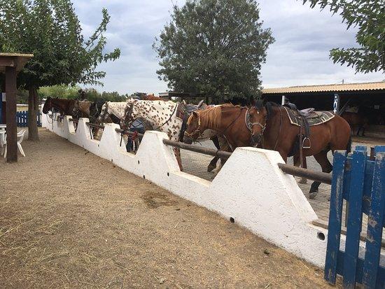 Ranch Luke
