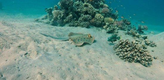 Diving Ocean Makadi Bay: 20170814_203136_large.jpg