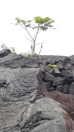 Pahoa, Hawái: Lava
