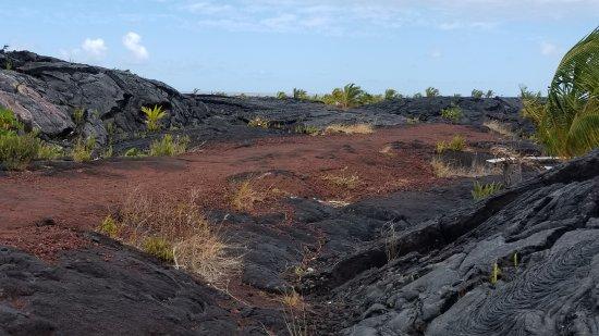 Pahoa, Hawái: Trail