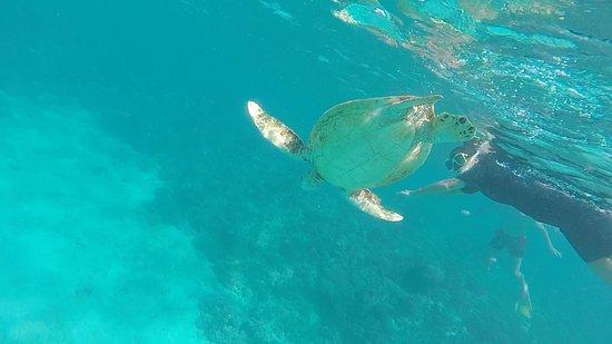 Reef Daytripper: photo0.jpg