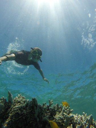 Reef Daytripper: photo1.jpg