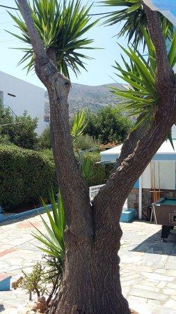 Hotel Villa Anna Photo
