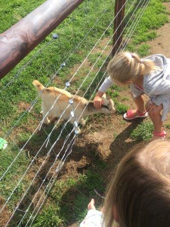 Mini Meadows Farm: photo6.jpg