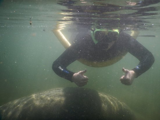 Fun 2 Dive: Grandson with Manatee