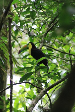 Rainforest Adventures: visitor to our luncheon