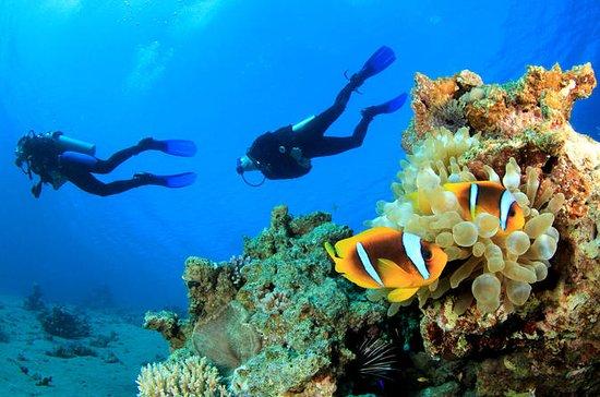Voyage de plongée sous-marine autour...