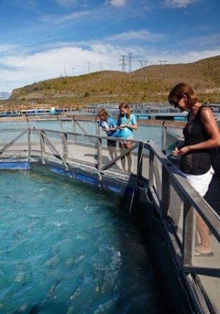 Twizel, Nueva Zelanda: Feed the salmon and see them up close