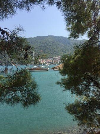 Foto Yesiluzumlu