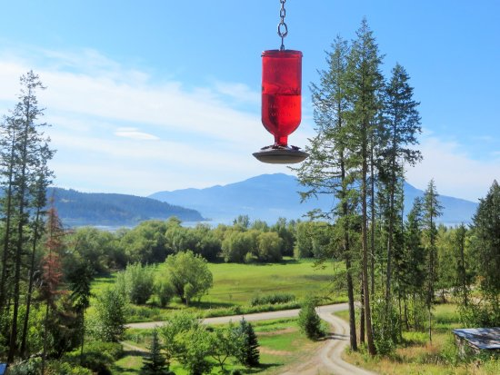 Tappen, Canada : fabulous views