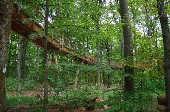 Orscholz, Germany: sentier d'accès à travers la forêt