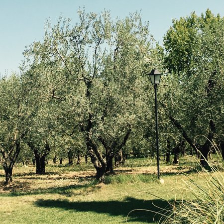 Agriturismo Le Anfore: photo4.jpg