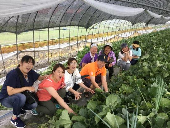 富良野メロン収穫体験!メロンハウスでメロン作りのプロのお話を聞きながら、自分のMyメロンを収穫体験!そしてお土産としてお持ち帰り〜。Furano Melon special tour!