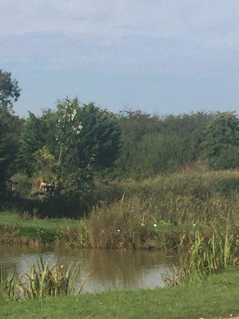 Maltby le Marsh