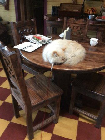 Hotel Casa Antigua: This cat was tethered on long lease 24/7. It was allowed to walk, sit and lie on breakfast table