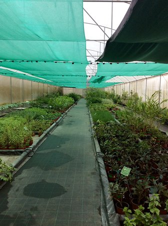 Санта-Барбара, Коста-Рика: Meticulously cleaned and labeled greenhouses. Picture is one of several. Very healthy plants