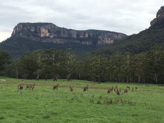 Emirates One&Only Wolgan Valley: Ask for a wildlife tour to see the kangaroos