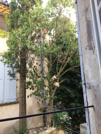 Côte Lourmarin : Neighborhood kittens playing in a tree outside of the kitchen while we had breakfast - delightfu