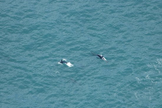 Wings Over Whales: 20170811013801_IMG_2075_large.jpg
