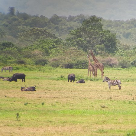 African Scenic Safaris Photo
