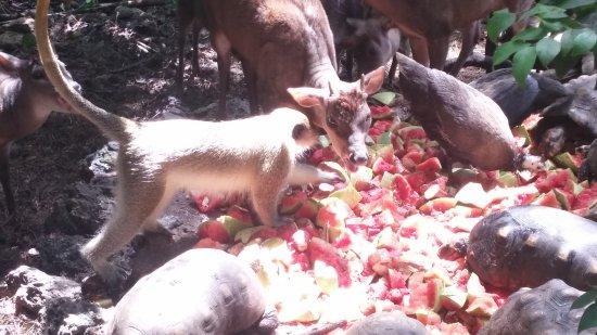 Barbados Wildlife Reserve: pranzo