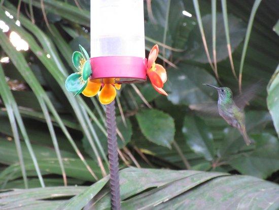 Secret Garden Iguazu B&B: Desayunando y contemplando el espectáculo de colibries , mas de 30 !