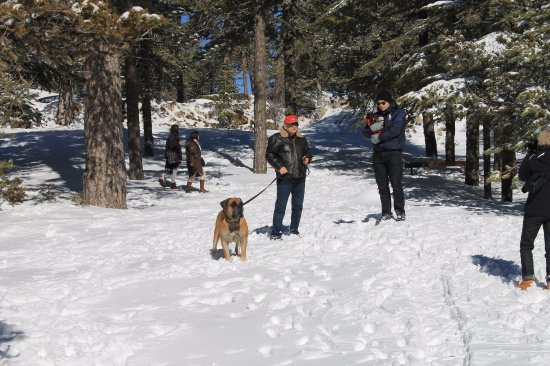 Troodos Mountains, Cyprus: Very pet friendly.