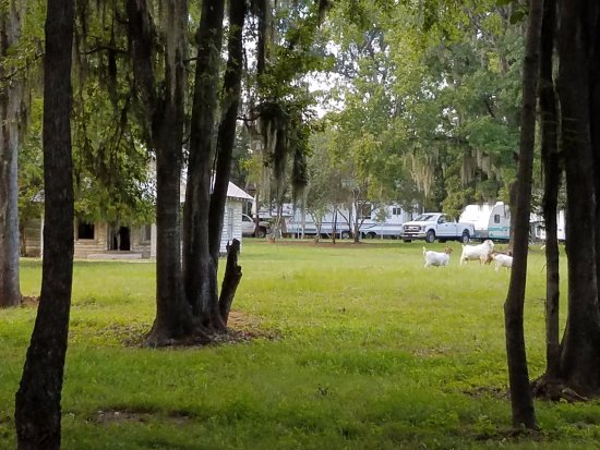 Millbrook, AL: Campsites near the abandoned Spectre set from Big Fish