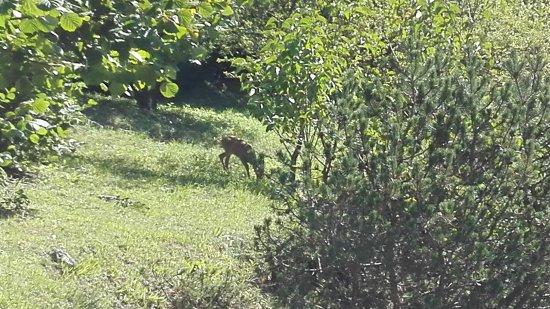 Lozzo di Cadore, Italie : IMG_20170823_111341_large.jpg
