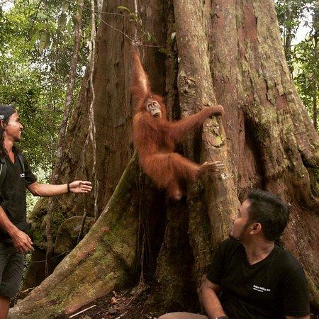 Sumatra Tour Bukit Lawang Adventure