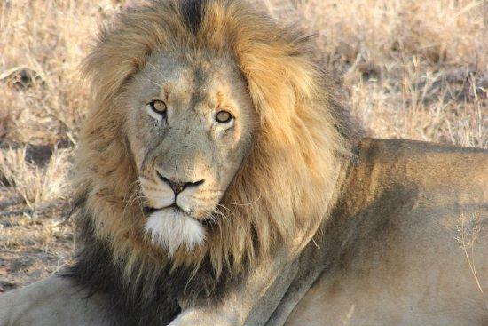 Garonga Safari Camp afbeelding