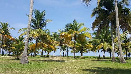 Landscape Picture Of Marari Beach Resort Mararikulam Tripadvisor
