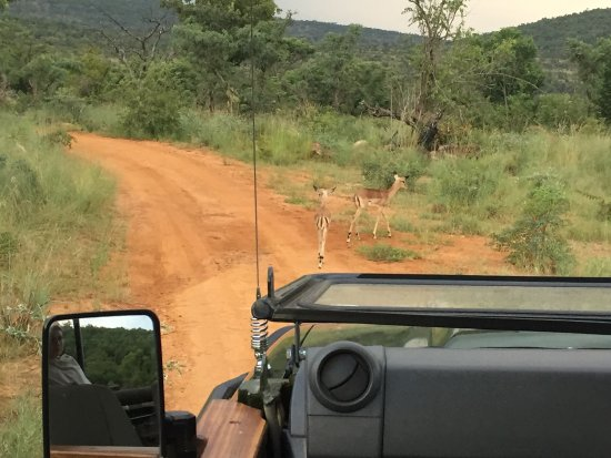 Welgevonden Game Reserve, Sudáfrica: photo4.jpg