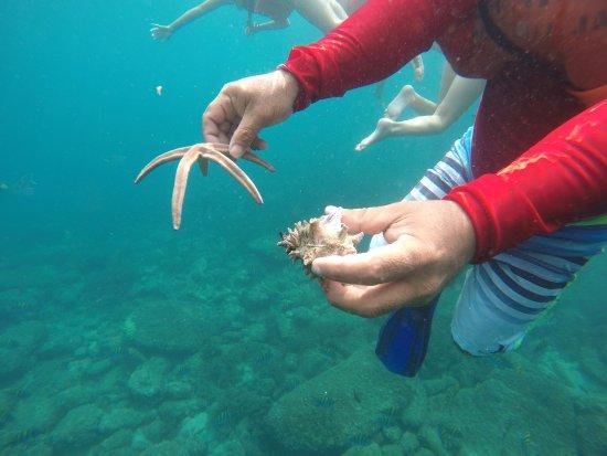 Majahuitas, Mexiko: Snorkel
